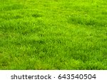 fresh green manicured lawn... | Shutterstock . vector #643540504