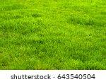 Fresh Green Manicured Lawn...