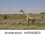 african wildlife  tanzania ... | Shutterstock . vector #643563823