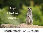 cute meerkat sitting upright on ... | Shutterstock . vector #643676308