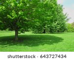 tree and shadow | Shutterstock . vector #643727434