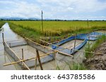 Aquaculture In Rice Field The...