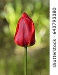 red tulip | Shutterstock . vector #643793380