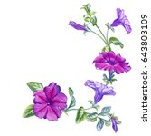 watercolor hand painted petunia ... | Shutterstock . vector #643803109