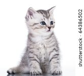 Stock photo british kitten 64386502