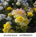 gloriously  magnificent...   Shutterstock . vector #643886824