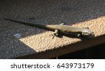 lizard.   Shutterstock . vector #643973179