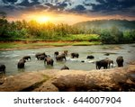 herd of elephants bathing in... | Shutterstock . vector #644007904
