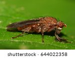 macro side view of a dark  long ... | Shutterstock . vector #644022358