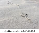 footprints of a lonely bird on... | Shutterstock . vector #644049484