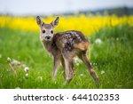 young wild roe deer in grass ... | Shutterstock . vector #644102353