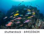 beautiful healthy coral reef...   Shutterstock . vector #644103634