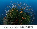 beautiful healthy coral reef...   Shutterstock . vector #644103724