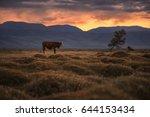 a cow grazing on an autumn... | Shutterstock . vector #644153434