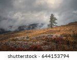 a lonely tree on a background... | Shutterstock . vector #644153794