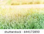 landscape nature view of green... | Shutterstock . vector #644172850