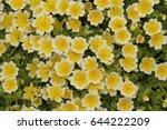 "yellow and white ""douglas'...   Shutterstock . vector #644222209"