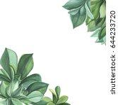 green plants succulents.... | Shutterstock . vector #644233720