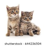 Stock photo two little kittens isolated on white background 644236504