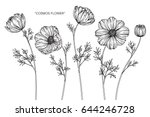 cosmos flowers drawing and... | Shutterstock .eps vector #644246728