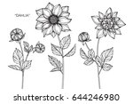 dahlia flowers drawing and... | Shutterstock .eps vector #644246980