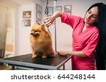 pet groomer with scissors makes ... | Shutterstock . vector #644248144