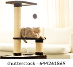 Stock photo cat sitting on a scratching post on a living room background 644261869