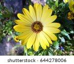 Bright Yellow Blossom Of...