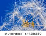 Dandelion Abstract Background....