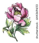 the branch flowering pink peony ... | Shutterstock . vector #644369653