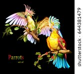 Illustration Of Two Parrot...