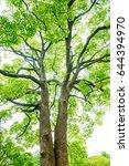 big evergreen tree | Shutterstock . vector #644394970