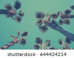 palm trees shot from below with ... | Shutterstock . vector #644424214