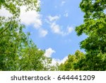 Fresh Green Trees And Blue Sky...