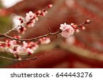 cherry blossom closeup at... | Shutterstock . vector #644443276