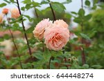 beautiful yellow  pink  and... | Shutterstock . vector #644448274