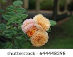 beautiful yellow  pink  and... | Shutterstock . vector #644448298