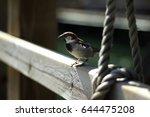 Sparrow Bird Over A Wood Fence...