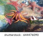 Starfish Tide Pool