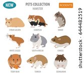 Stock vector hamster breeds icon set flat style isolated on white pet rodents collection create own 644482519