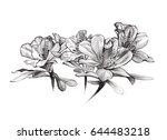 flower bouquet on white... | Shutterstock . vector #644483218