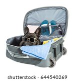 French Bulldog With Glasses...