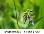 flowers calathea picturata.... | Shutterstock . vector #644551720