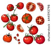 tomato. red drawn line. sketch... | Shutterstock .eps vector #644593798