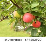 ripe red apples and green... | Shutterstock . vector #644603920