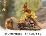 Stock photo red squirrel standing on bicycle with flowers and another squirrel beneath 644607553