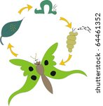 fun cartoon showing butterfly metamorphosis