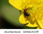 macro view from the side and... | Shutterstock . vector #644614159