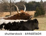 female longhorn cow with her... | Shutterstock . vector #644685604