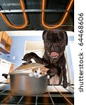 Stock photo funny dog card 64468606